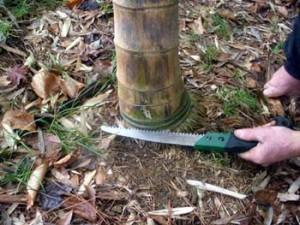 chop-bamboo