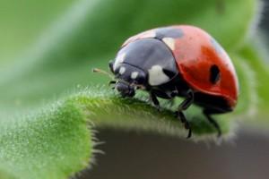 ladybug-prevention-cumming-ga_0