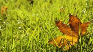 grass-698649_1280
