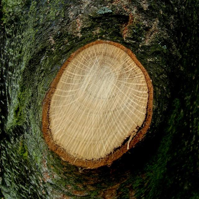 Cut Tree Limbs