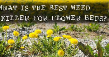 Best Weed Killer Reviews for 2018